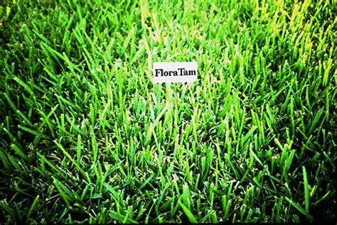 Plant Answers> Floratam St. Augustine Grass