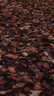 Aesthetic Brown HD Wallpapers - Wallpaper Cave