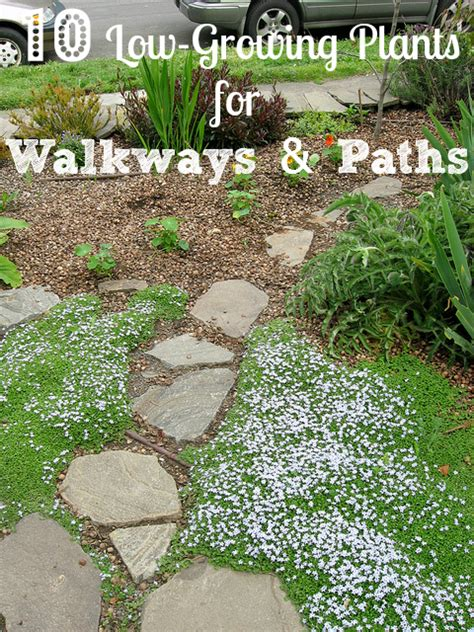 walkway plants low growing plants guide border plants for walkway install it direct