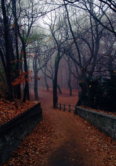 foggy park pictures   images  facebook