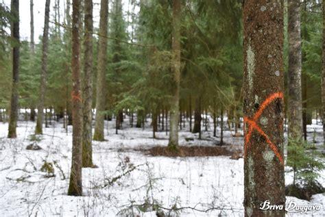 Mežaparkā veiks gan sanitāro, gan kopšanas cirti | Brīvā ...