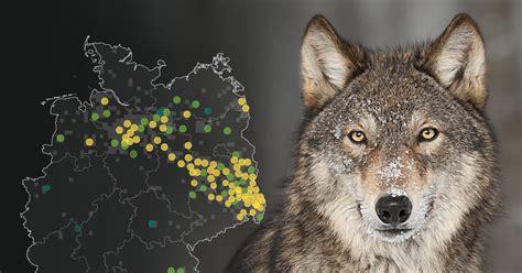 woelfe  deutschland interaktive karte der vorkommen
