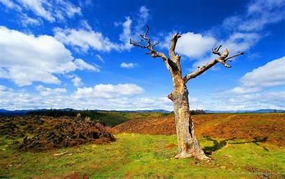Nature Scenes Widescreen Computer Desktop Wallpapers Natural