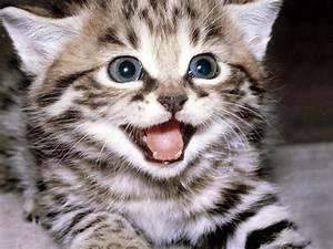 Il miagolio dei gatti Comportamento