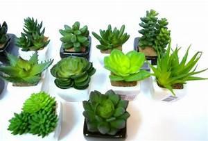 Plantes Grasses Intérieur : plantes grasses en 26 id es jolies et adaptatives ~ Melissatoandfro.com Idées de Décoration