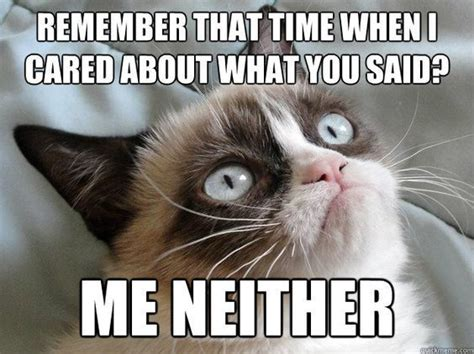 Best 25+ Funny Grumpy Cats Ideas On Pinterest