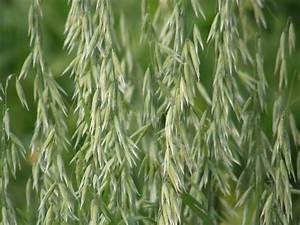 oat - definition - What is