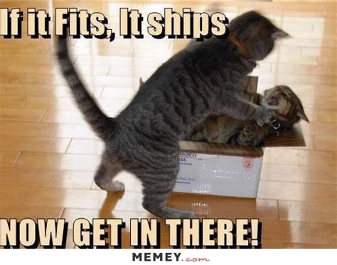 cat memes funny cat pictures memeycom page