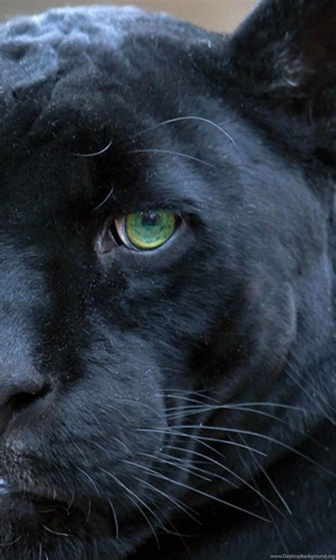 black panthers green eyes    ultra hd