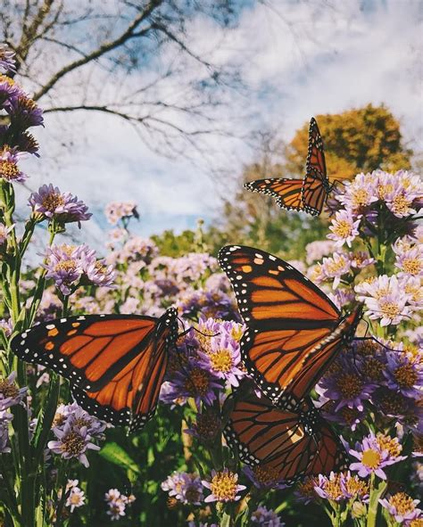 butterflies nature aesthetic nature photography