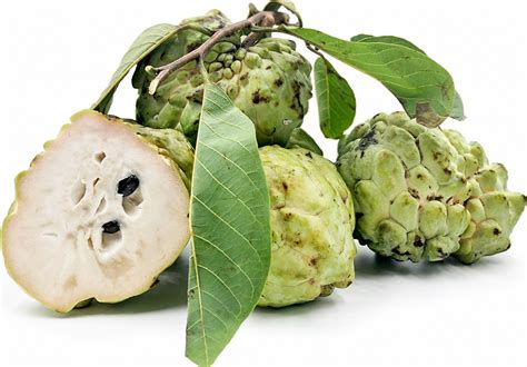 Austrailian Custard Apples Information, Recipes and Facts