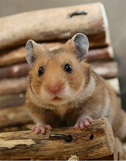 Hamster Erstausstattung Fuer