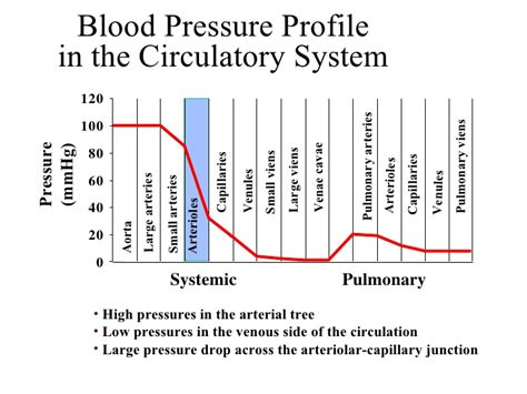 vascular sys student notes