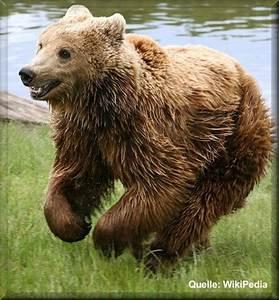 Und Der Bär : der l we und der b r ~ Orissabook.com Haus und Dekorationen