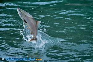 Jumps and Splashes   Fishing Photography Articles  Fishing ...