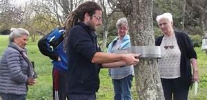 Piège à Chenilles Processionnaires : chenilles processionnaires du pin la chasse est ouverte ~ Dailycaller-alerts.com Idées de Décoration