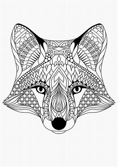 Coloring Fox Printable Adults Pages Adult Designs