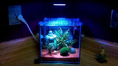 Lafata Cabinets West Bloomfield by 100 Glofish Danios U0026 Tetra Hd Fascinating