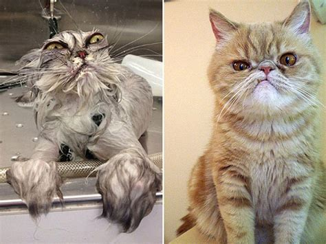 pictures of cats hilarious photos of cats with angry faces daily
