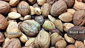 Difference Between Pecans and Walnuts - YouTube