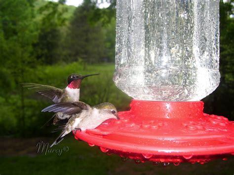 top 28 hummingbird habitat ruby throated hummingbird facts anatomy diet habitat here s the