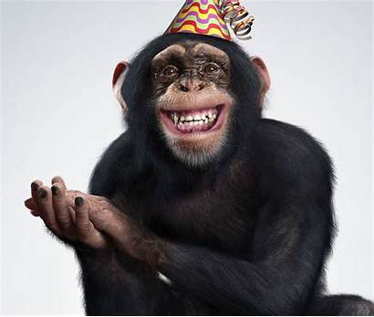 Funny Monkey Majom Humoros Megaport