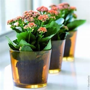 Pflanzen Für Innen : gr n erleben welchen eindruck macht ihr fensterbrett ~ Michelbontemps.com Haus und Dekorationen