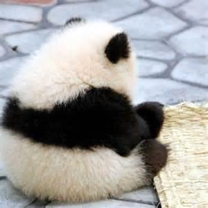 パンダ 画像 に対する画像結果