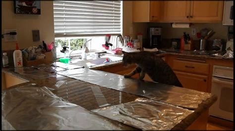 cat countertop surfing prevention aluminum foil  packing tape youtube