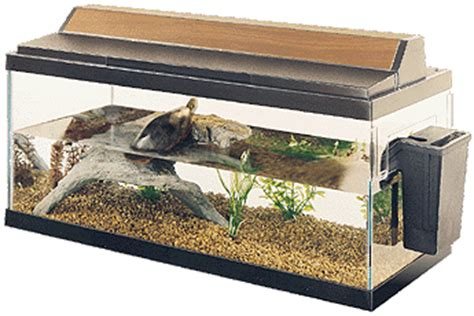 Heat Ls For Water Turtles by Phil S Painted Turtle Information Site