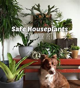 Our 10 Favorite Pet Safe Indoor Plants And 7 To Avoid