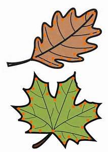 Feuilles D Automne à Imprimer : gabarit feuilles d 39 automne lacer ~ Nature-et-papiers.com Idées de Décoration