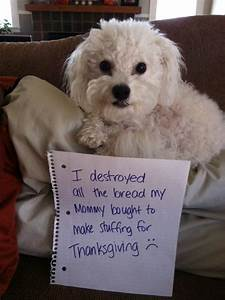 16 dogs who thanksgiving dinner