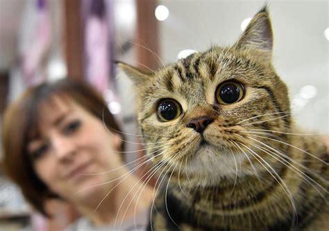 cat food recall   choking hazard  recall