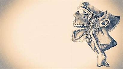 Anatomy Diagram Wallpapers Skeletons Human Monochrome Backgrounds