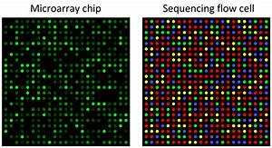Dna Microarray File Microarray And Sequencing Flow Cell Svg Wikimedia