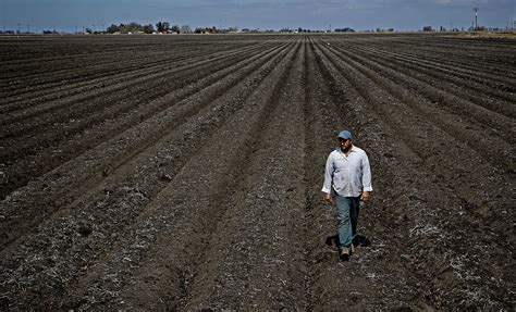californias drought prone pattern forcing farmers  adapt