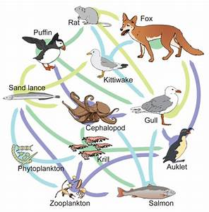 6 3  Food Chains And Food Webs