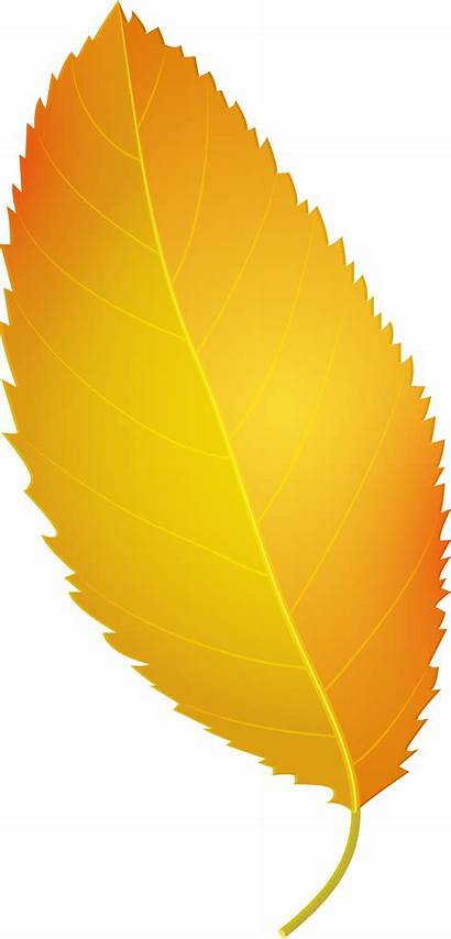 Leaf Yellow Autumn Clip Leaves Clipart Fall