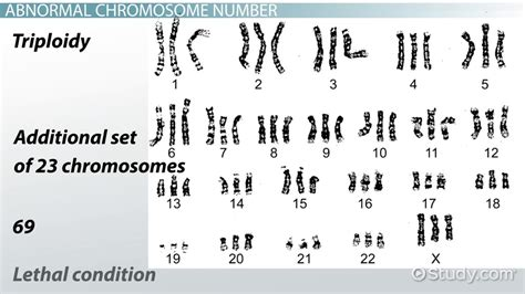 abnormal chromosome number structure video lesson