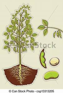 Vector Clipart of Soybean plant.Vector green illustration ...