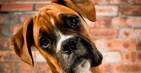 britains favourite dogs  pictures top   popular