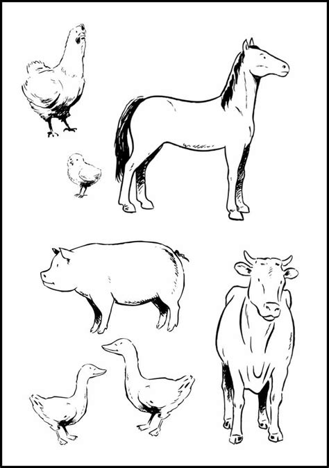 baby farm animal coloring pages  coloring pages
