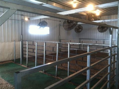 Steer Barn by The 25 Best Show Cattle Ideas On Showing