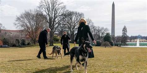 Major news: Biden's dog returns to the White House after ...
