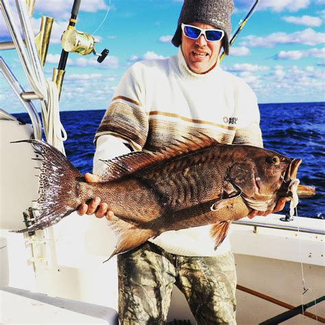 grouper goliath caught weather coast really there