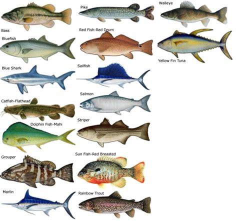 fish types names  fish  fish tank maintenance