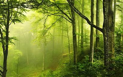 Forest Nature Baltana Resolution Wallpapers