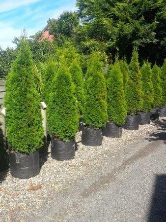 Zierbäume Für Den Garten