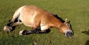 Bet You Didn U0026 39 T Know Horses Could Snore This Loudly